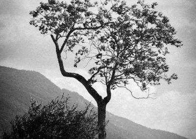 Arbre en noir et blanc à Seynod