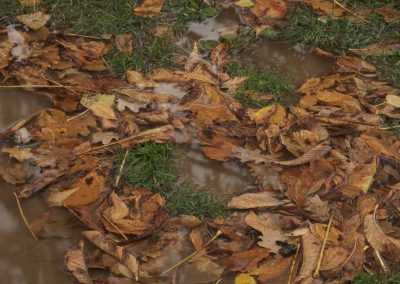 Feuilles au sol en automne