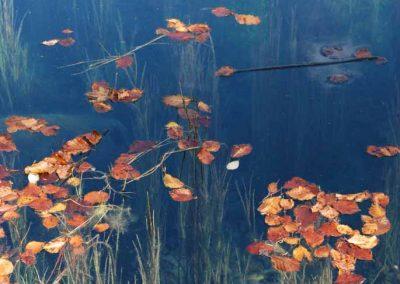 Des feuilles sur le lac vert au plateau d'Assy