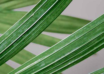 Macro photographie sur végétal