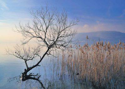 Marécages du lac d'Annecy