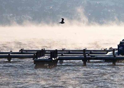 Un oiseau dans la brume sur le lac s'Annecy