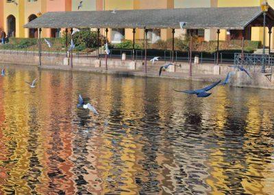 Des oiseaux volent au dessus du Thiou dans le vieil Annecy