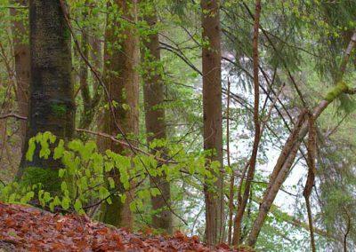 Un sous-bois en automne