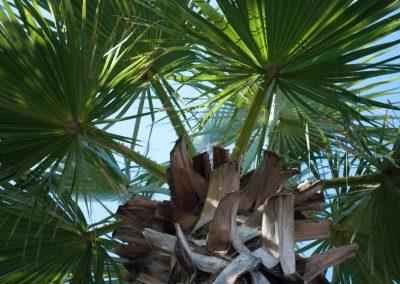 Un palmier vu en contre-plongée