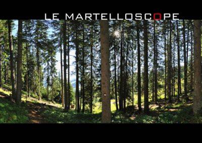 Le martelloscope dans la forêt de Rochebrune